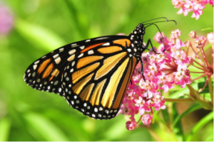 Restoring Pollinator and Wildlife Habitat in Your Backyard @ Brewer Public Library | Richland Center | Wisconsin | United States