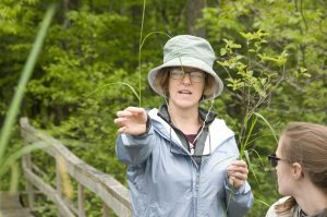 Wetlands educator show difference between Reed Canary Grass and native wetland grasses.