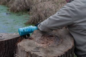 Picture of someone spraying herbicide on a tree stump.