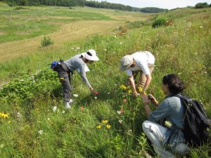 Picture of volunteers training to find rare plants.