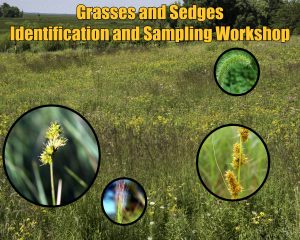 Grasses and Sedges Identification and Sampling @ Schmeeckle Reserve