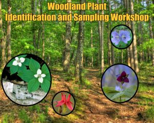 Woodland Plant Identification and Sampling @ Central Wisconsin Environmental Station, Amherst Junction, Wis.