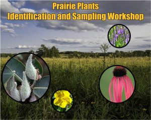 Prairie Plant Identification and Sampling Workshop @ Schmeeckle Reserve