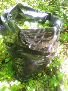Image of large construction bag filled with garlic mustard.