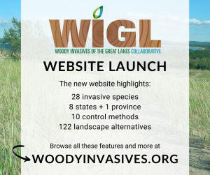 WIGL Launch Graphic to help tackle invasive woody species