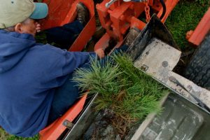 Image of landowner planting tree seedlings on a tractor pulled planter.