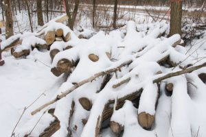 Image of ash log pile with a partial covering of snow.