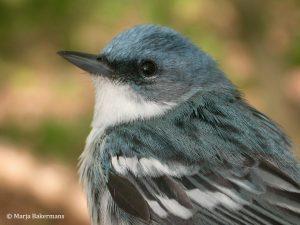 Closeup image of bird head
