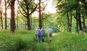Image of people walking on woodland trail