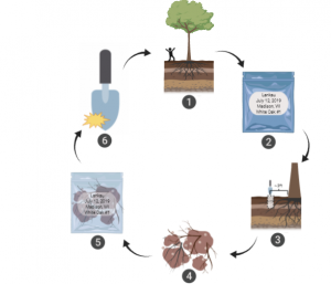 Graphic of woodland soil sampling steps
