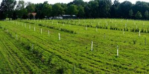 Image of agroforestry planting