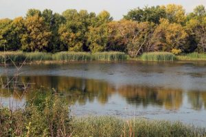 Image of fall wetland with open water and emergent wetland plants.