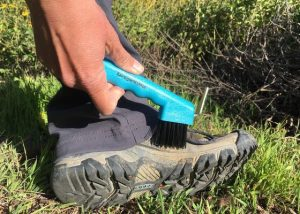 Image of hand with boot brush cleaning a boot.