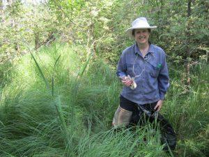 Image of naturalist wading in marsh grass.