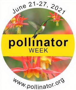 Logo for Pollinator Week with hummingbird feeding on wild columbine flower.