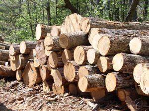 Image of log pile.