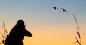 Image of duck hunter taking aim at a flight of birds at sunset.