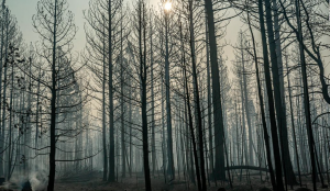 Image of burn forest on the bootleg fire.