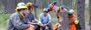 Image of instructor showing cuts on a stump.